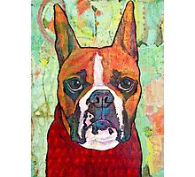 Boxer Snuggy Photographic Print