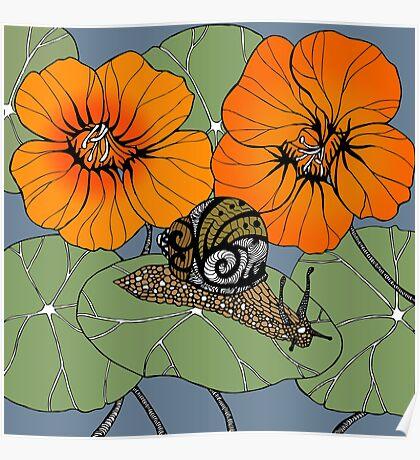 Snail with Nasturtiums Poster