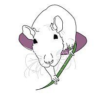 Little Rat Just Chillin Photographic Print