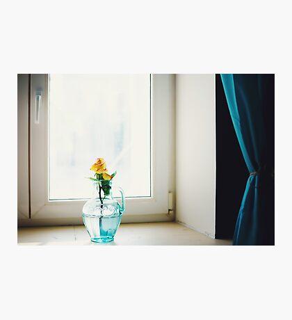 Rose flower in blue vase near window Photographic Print