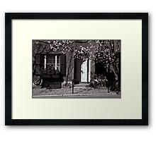 Tree in blossom, Boston, USA Framed Print