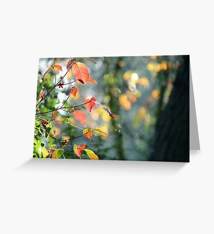 Fall Leaves V Greeting Card