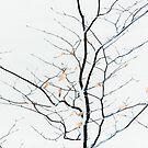 twiggy by Dorit Fuhg