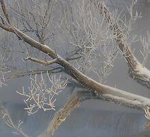 White skeleton by Jeannine St-Amour