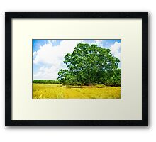 Hundred Acre Wood Framed Print