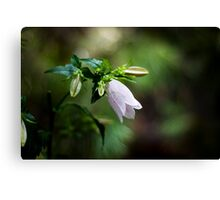 Korean Bellflower Canvas Print