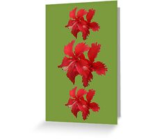Red hybiscus flower Greeting Card
