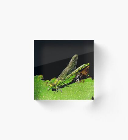 beauty emerges from the beast- green dragonfly Acrylic Block