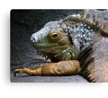 Common Iguana Relaxing Canvas Print