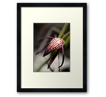 Pyrorchis Nigricans 2 Framed Print