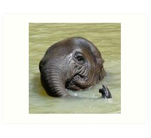 Watch My Trunk - Young Asian Elephant Art Print