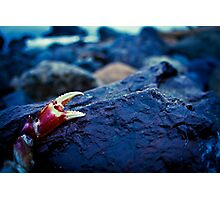 Red Claw Photographic Print