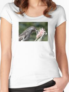 Little Wattle Bird ~ Concentration  Women's Fitted Scoop T-Shirt