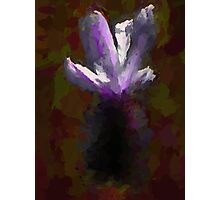 Bright Petals emerge from the Dark Photographic Print