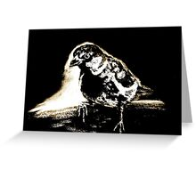 Black and white sparrow Greeting Card