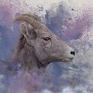 Ewe Mountain Sheep by Donna Ridgway