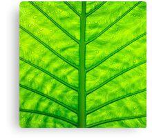 Close up green leaf texture Canvas Print