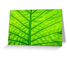 Close up green leaf texture Greeting Card