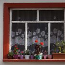 A window by rasim1
