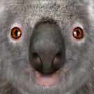 Koala Bear by Vac1