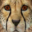 Cheetah by Vac1