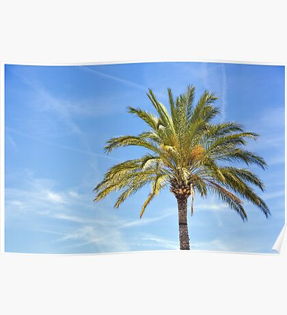 Palm tree against blue sky.  Poster