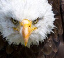 Beautiful north american bald eagle Sticker