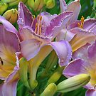 Scent of a Lily by Kathilee