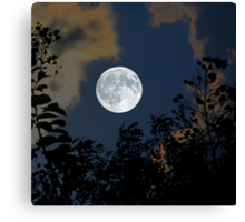 Moon Glo Canvas Print