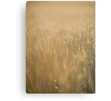Common Wheat Canvas Print