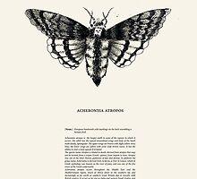 Acherontia atropos by annegare