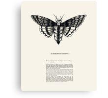 Acherontia atropos Canvas Print