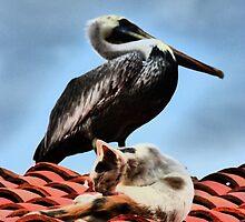 cat and pelican - gato y pelicano by Bernhard Matejka