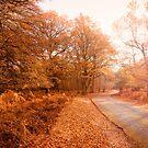 Autumn Colours by Svetlana Sewell