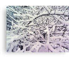 Winter branch Metal Print