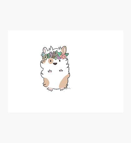 Pretty Hamster Photographic Print