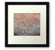 Agatized Coral Framed Print