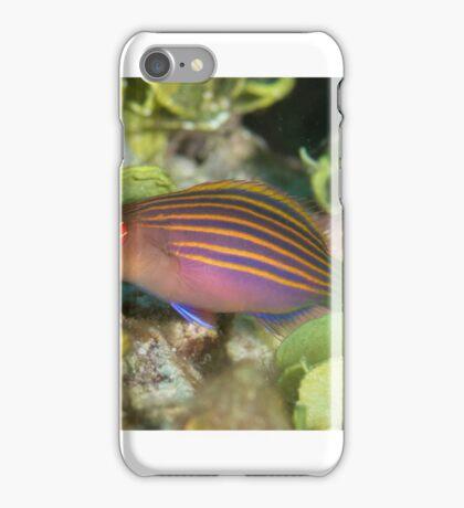 Sixstripe Wrasse iPhone Case/Skin
