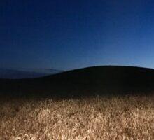 Wheat field underneath the Montana moonlight  Sticker