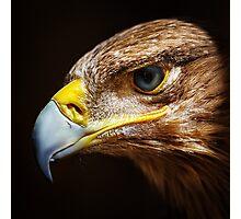Golden eagle close up portrait Photographic Print