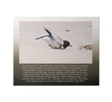 HOODED PLOVER LOG ~ Broken Wing Routine by Adult Hooded Plover Art Board
