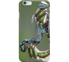 mating hawkers iPhone Case/Skin