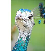 Pretty Peahen Photographic Print