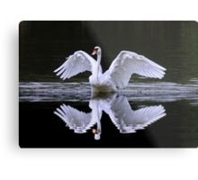 Swan and Reflection ... Two for One Metal Print