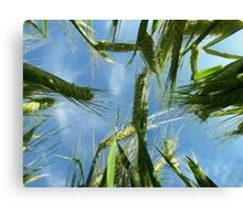 Laying In The Barley Canvas Print