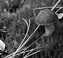 Bitter Bolete in Broom Moss by Otto Danby II