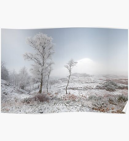 Glen Shiel Misty Winter Trees 2 Poster