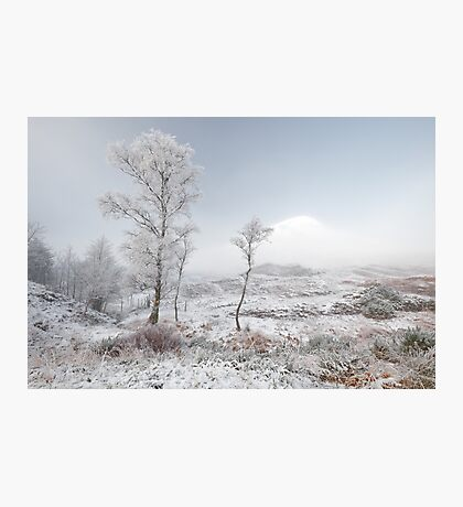 Glen Shiel Misty Winter Trees 2 Photographic Print