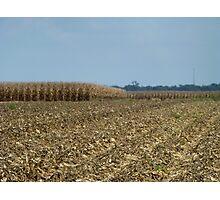 Tilt Shift Corn Photographic Print