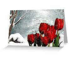 Winter Tulips Greeting Card